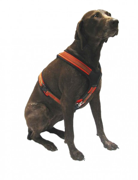 Hundegeschirr Follow orange/oliv