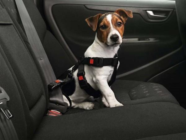 Karlie Sicherheitsgurt für mittlere Hunde - Größe M
