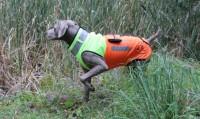 Hundeschutzweste Boar Protec Orange/Gelb